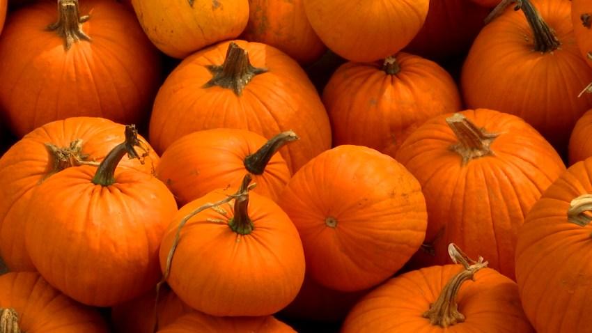 pumpkin patch kid update 3
