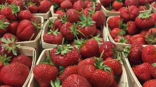 Recoge fresas en Butler's Orchard