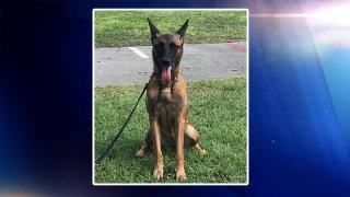 Zena, perro policía de Cocoa